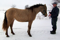 Dazzle Mare in the Snow